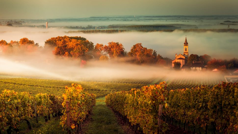 Scenic view of French vineyard