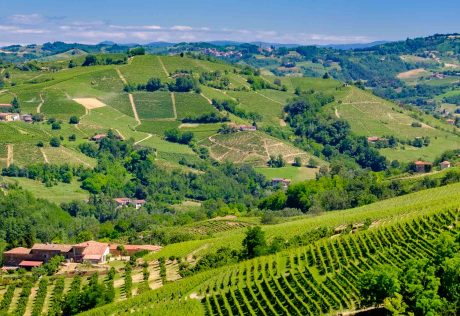Aerial view of vineyard in Piedmont