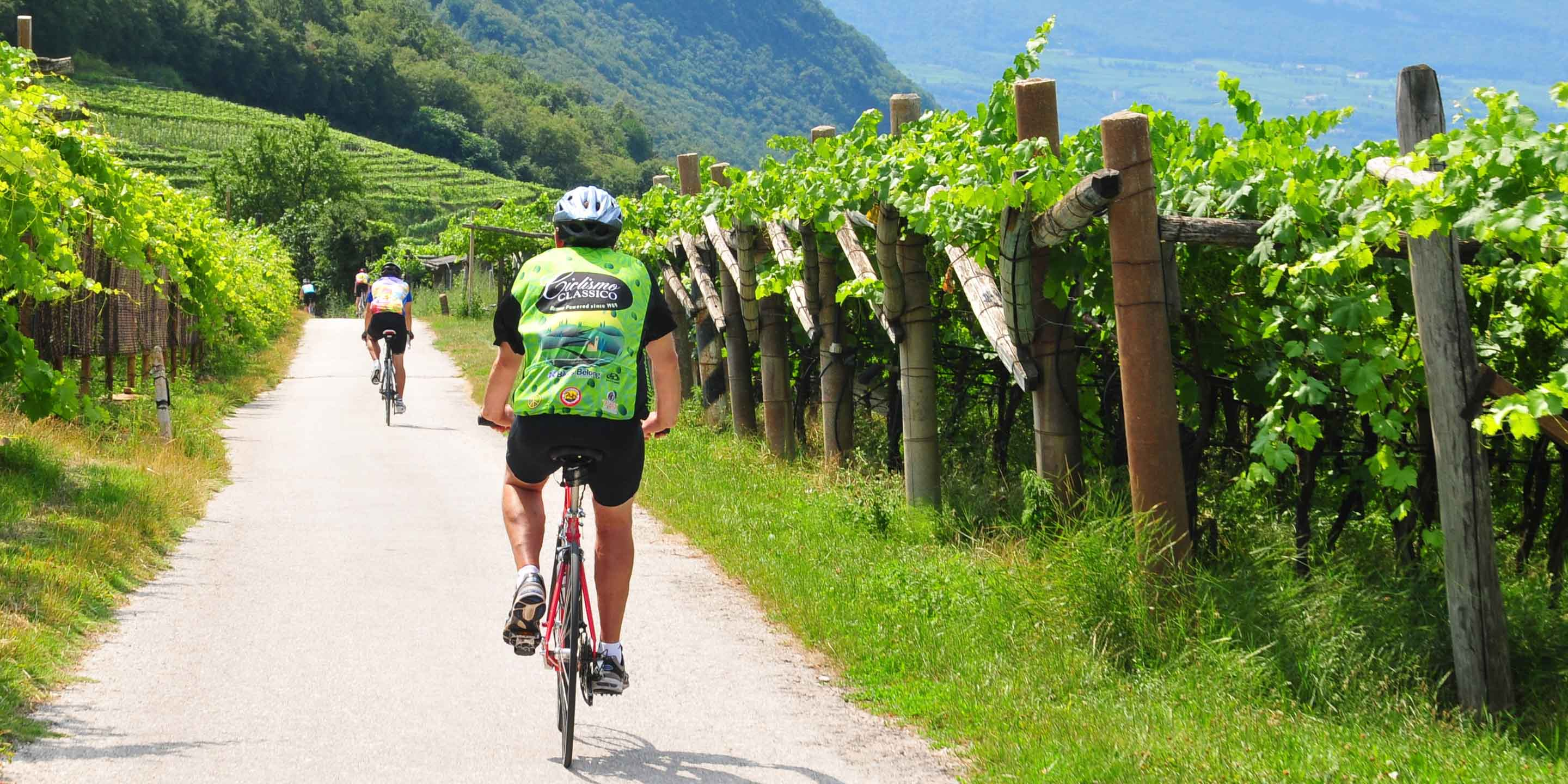 Biking by Sud Tyrol vineyards