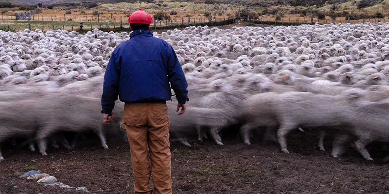 Man in Patagonia, Chile herding sheep