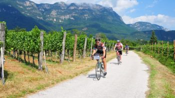 Biking next to vineyard in Sud Tyrol