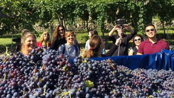 Group in front of grapes at vineyard